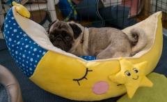 När Leni är trött är det skönt att lägga sig i valparnas mjukisbåt