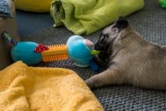 Bulten leker med nyaste leksaken