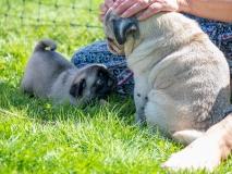 Bulten och Mimmi hälsar på varandra