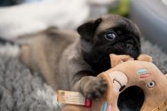 När syskonen sover får Ask hålla till godo med en leksak att busa med
